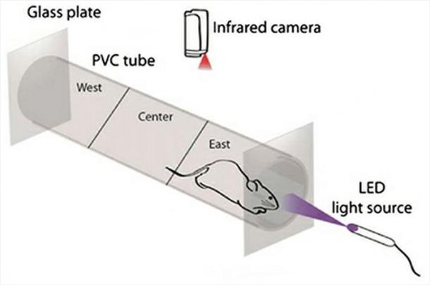 La photochimie permettra aux gens aveugles de voir