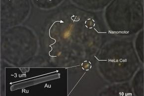 Les chercheurs arrivent à déplacer des nano moteurs dans le corps
