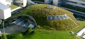 Produire de l'électricité à partir de plantes vivantes