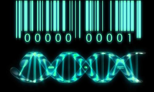 Le transistor biologique donne vie à l'informatique